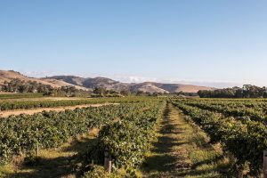 barossa valley adelaide